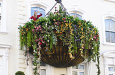 London Wonder: The Hanging Basket of Paddington