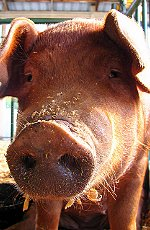 Heston Blumenthal, Delia Smith Waitrose ad banned for telling porkies.