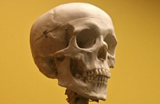 David Tennant Acted with Real Skull on London Stage.
