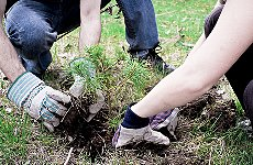 Tree O'Clock Aims to Plant 20,000 Trees in One Hour in London Park.