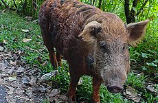 Wild Boar Among Exotic Creatures Now Running Free in London and Beyond.