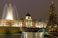 Christmas Starts Here as Trafalgar Square Tree is Raised.