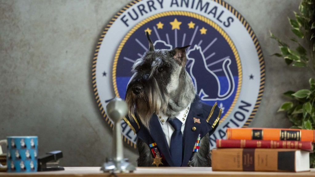 Schnauzer (voiced by Noel Johansen) in Cats & Dogs: Paws Unite!, directed by Sean McNamara. Photo: Ryan Plummer. Copyright: 2020 Warner Bros. Entertainment Inc. All Rights Reserved.